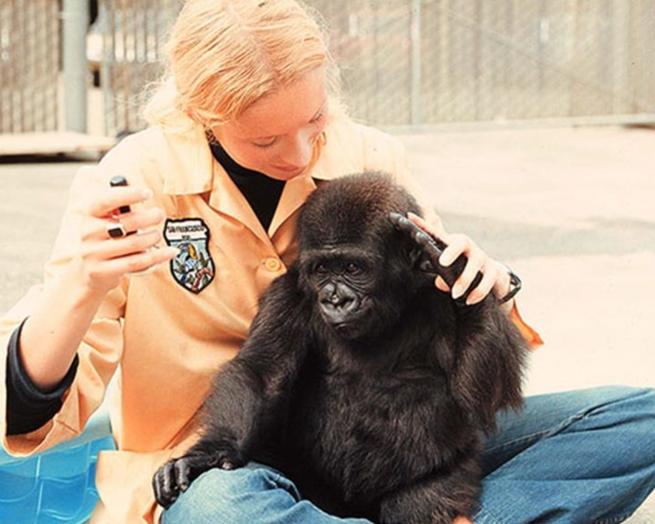 Koko Meets Penny Patterson